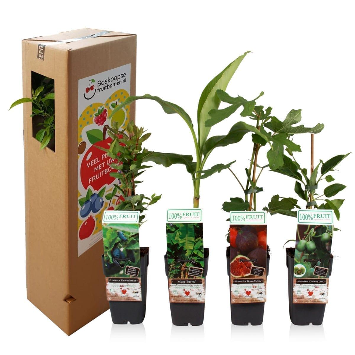 boskoopsefruitbomen | tropische fruitplanten