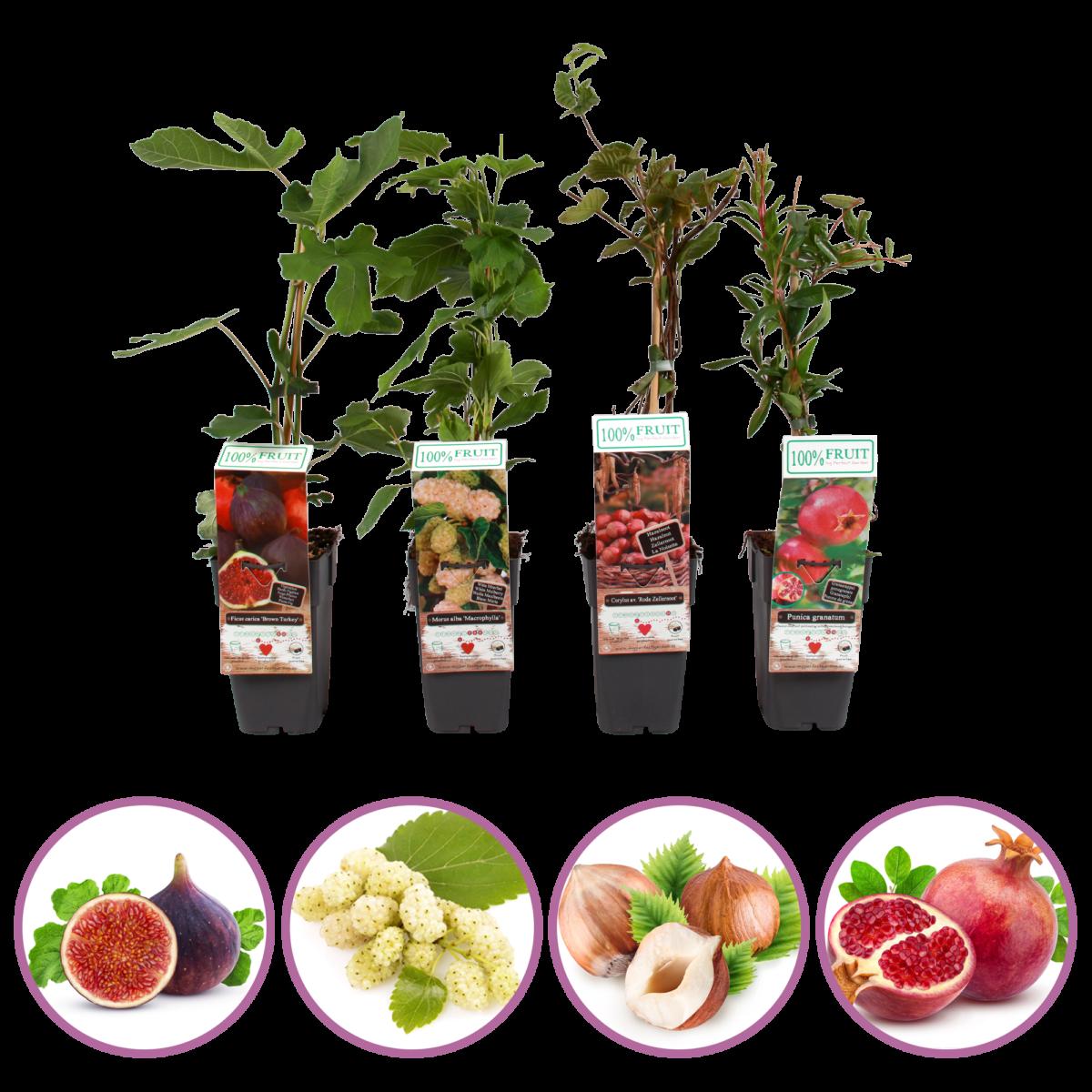 boskoopsefruitbomen | exclusieve fruitplanten