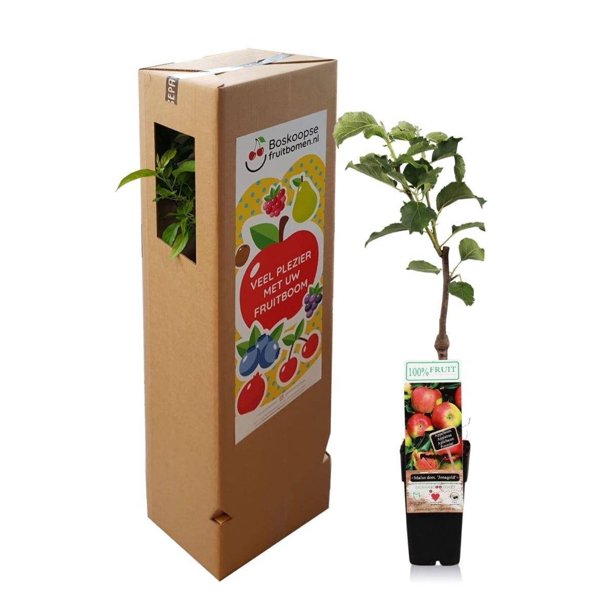 boskoopsefruitbomen | Appel met verzenddoos