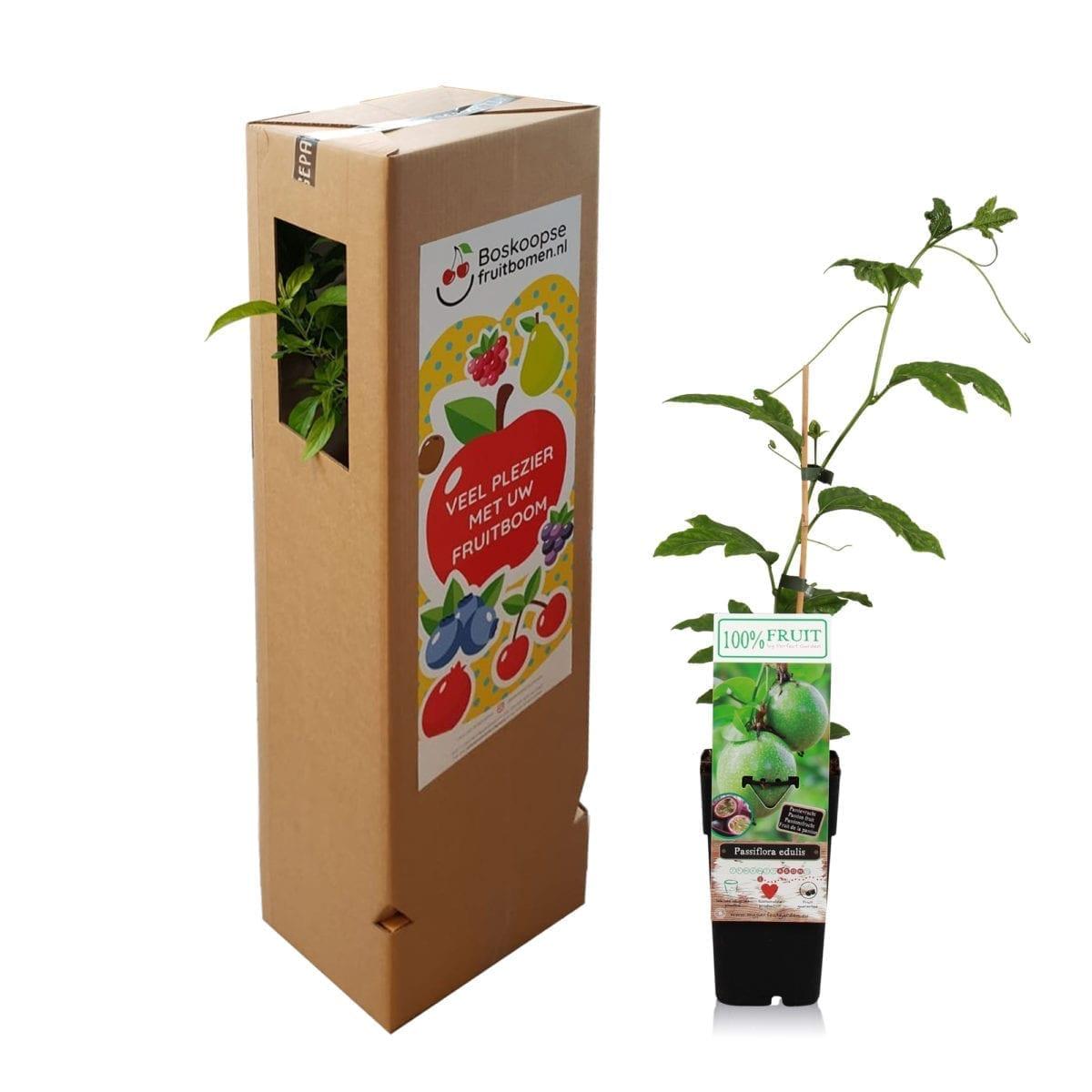 boskoopsefruitbomen   Passiflora edulis met verzenddoos