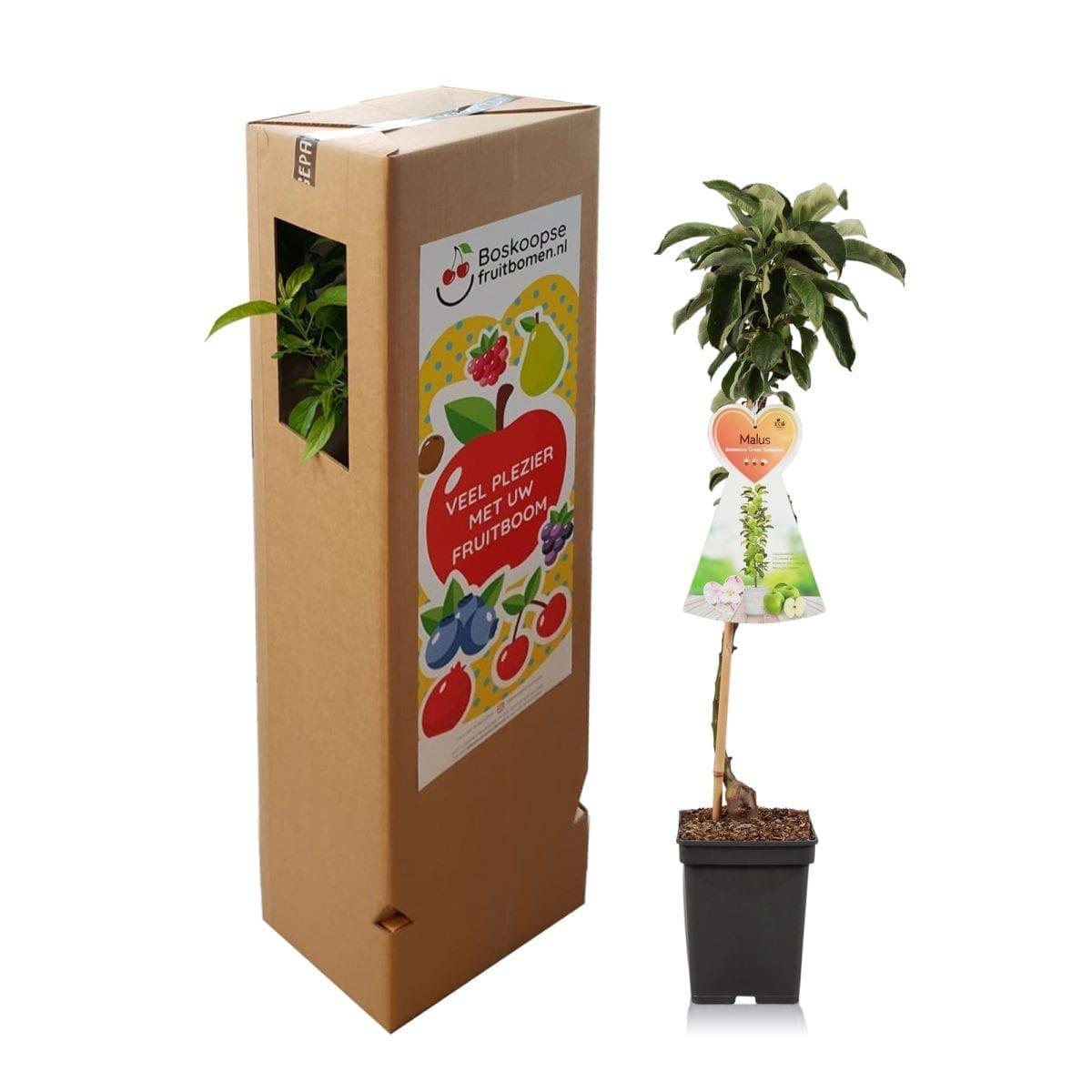 boskoopsefruitbomen | appelboom