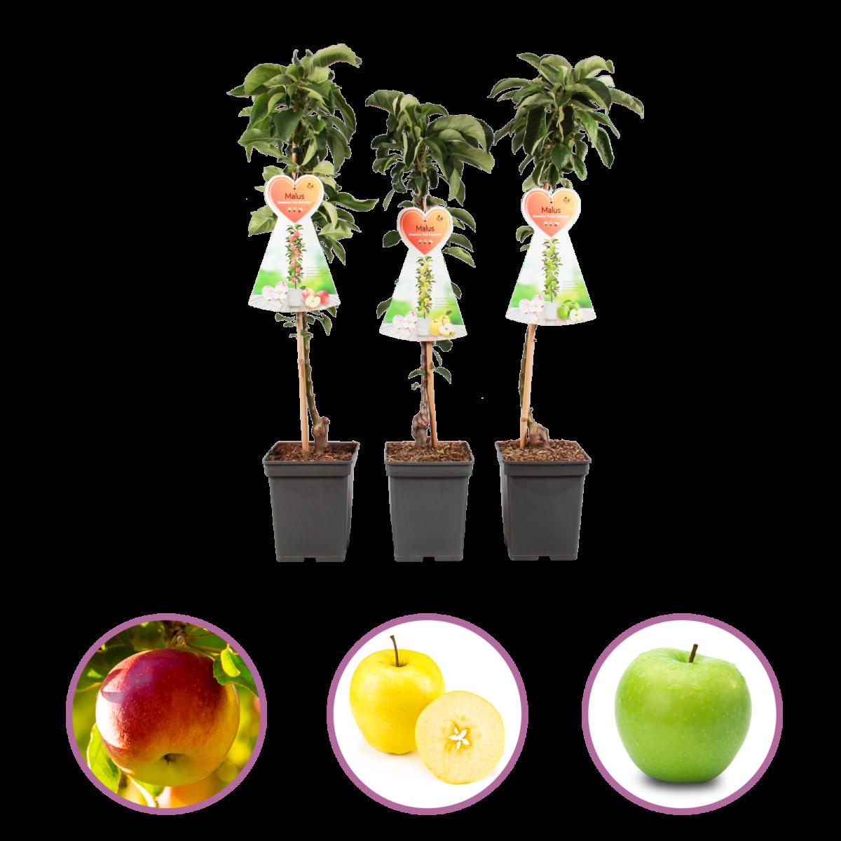 boskoopsefruitbomen | Appelbomen