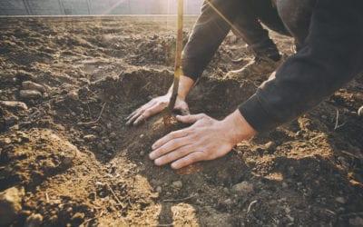 Hoe creëer je een fruittuin?